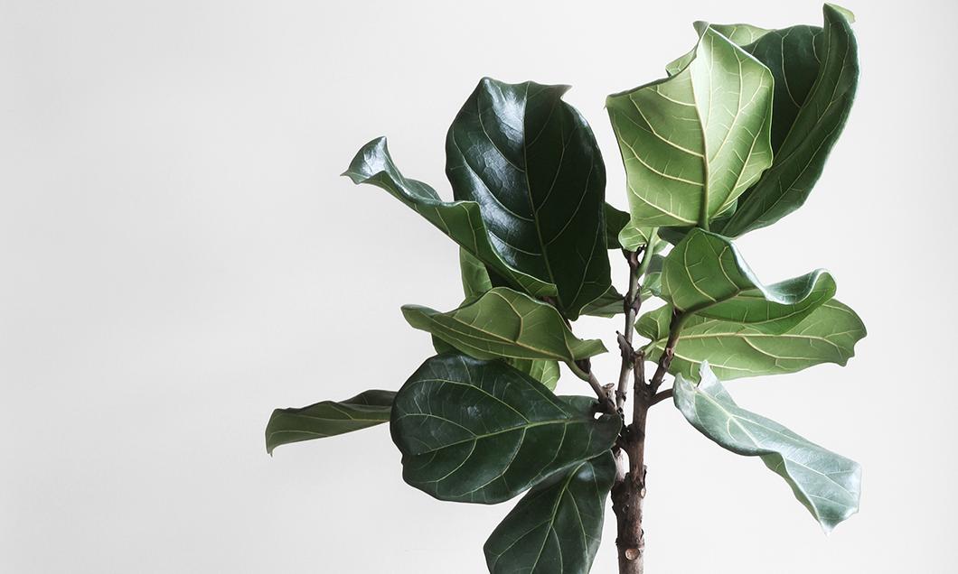 Grön växt framför vit vägg